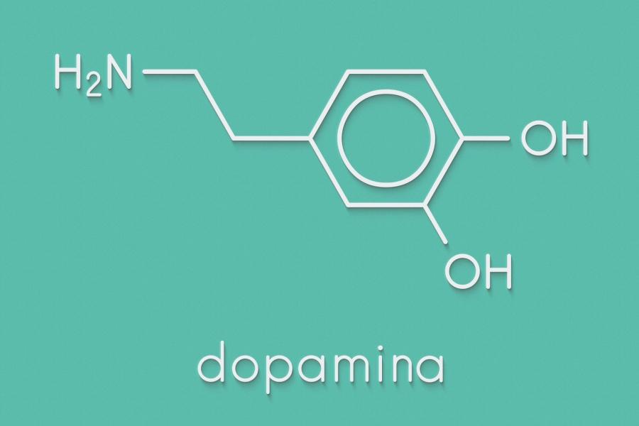 Dopamina – funkcja w organizmie