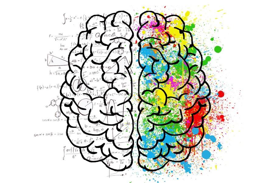 Rysunek przedstawiający dwie półkule ludzkiego mózgu.