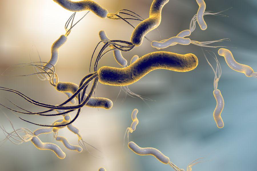 Helicobacter pylori - objawy i leczenie