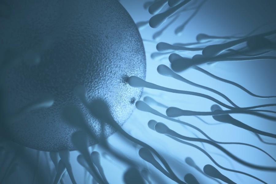 Jak przeprowadza się inseminację?