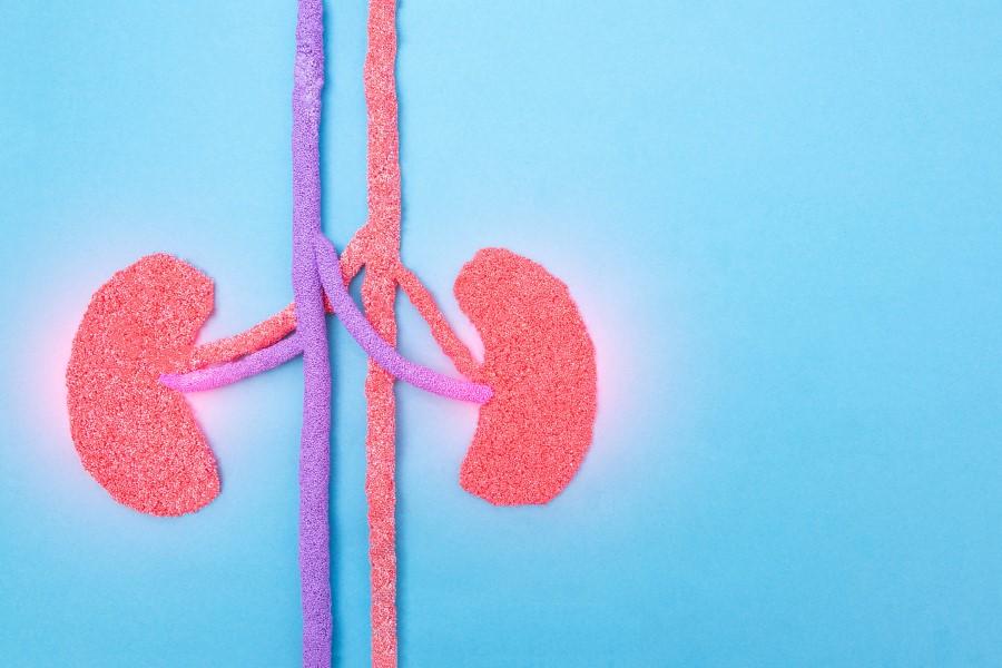 Grafika przedstawiająca dwie ludzkie nerki, dotknięte chorobą.