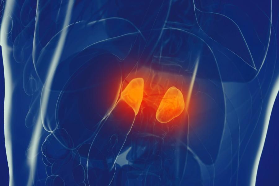 Nadnercza - funkcje, objawy choroby