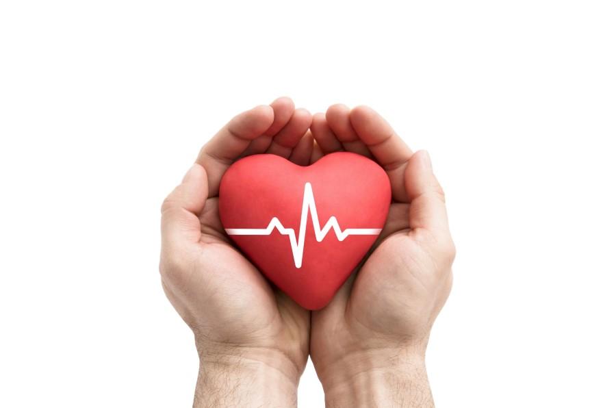 Model serca z linią izoelektryczną trzymany w dłoniach.